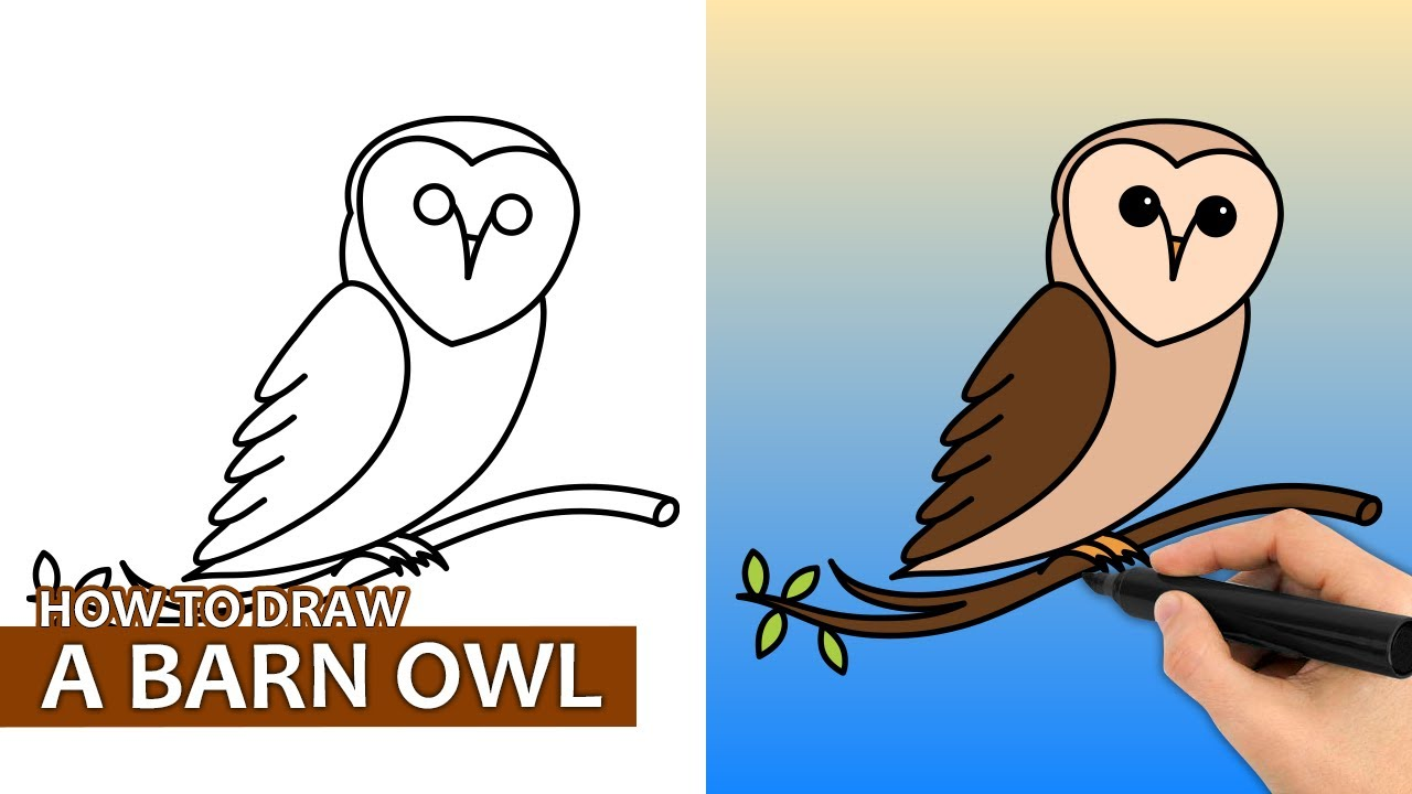 How To Draw A Barn Owl   Easy Step By Step Drawing Tutorial