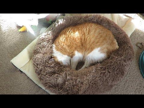 donut-cuddler-pet-bed-unboxing-&-review