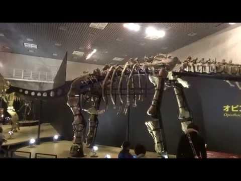 オピストコエリカウディア Opisthocoelicaudia skarzynskii:「大恐竜展」ゴビ砂漠の驚異