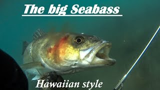 Spearfishing RECORD BREAKING SEA BASS with a Pole - Υποβρύχιο ψάρεμα με καμάκι Μεγάλο Λαβράκι ✔