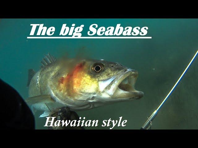 Spearfishing | RECORD BREAKING SEA BASS with a Pole - Υποβρύχιο ψάρεμα με καμάκι Μεγάλο Λαβράκι ✅