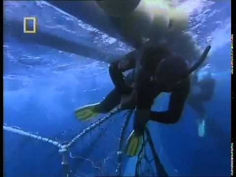 Tuna Cowboys   National Geographic Documentary 2016 HD