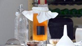 Чайный гриб (Комбуча). Как приготовить настой чайного гриба? С чего начать?