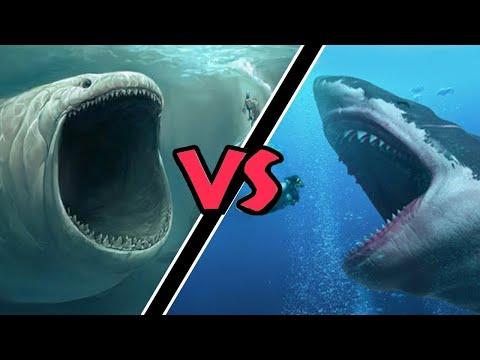 Мегалодон Против Самого Страшного Чудовища Океана