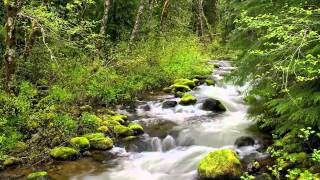 Download Relaxation music for sleep meditation and relaxing Calm Forest 30 minutes Mp3 and Videos