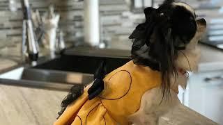 Zoé Haute Couture Sasha