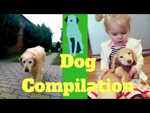 New Funny Dogs Vines Video Compilation 2016