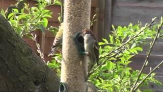 British Birds Feeding Bird Feeders