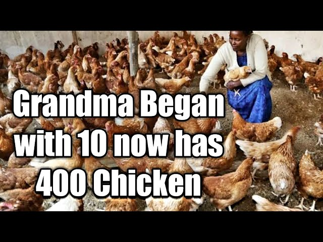 GRANDMA STARTED WITH 10 CHICKEN NOW 400