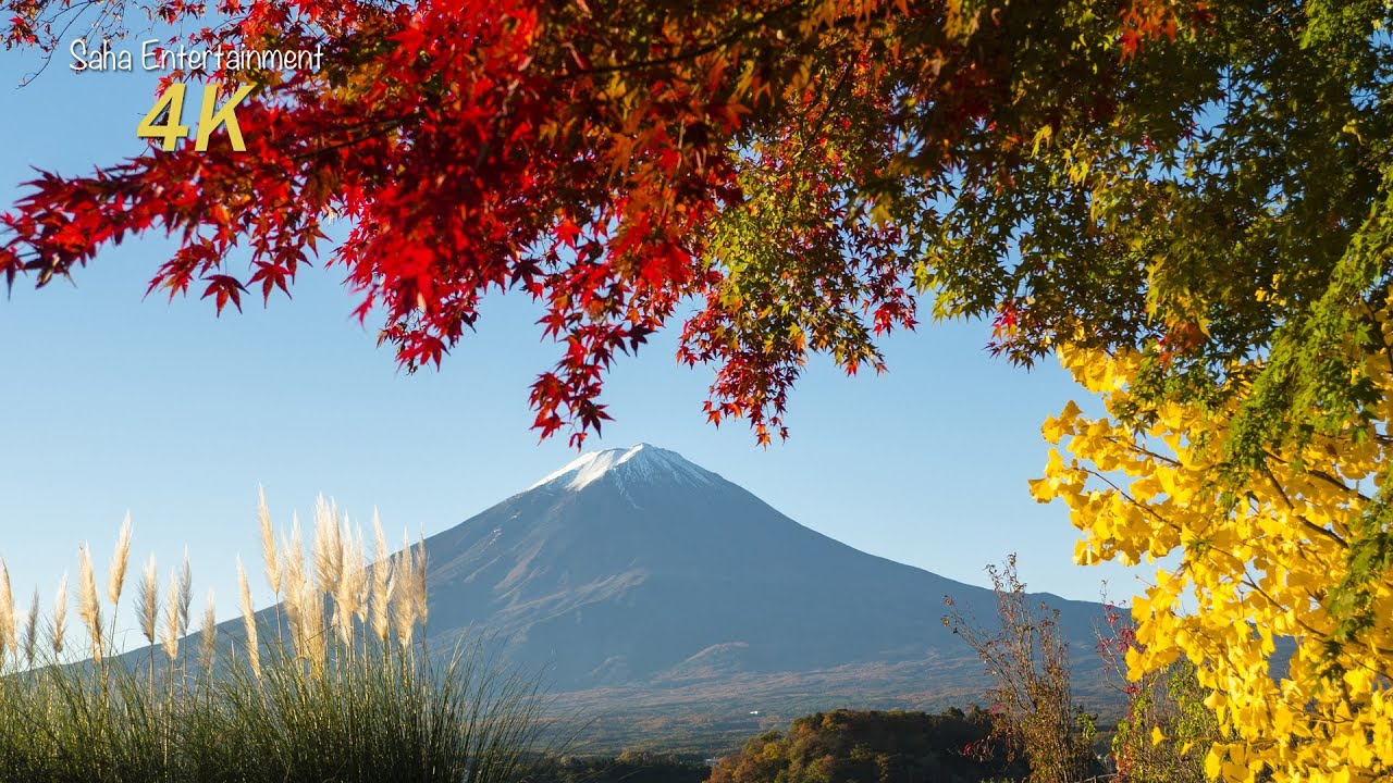 Fall Leaves Desktop Wallpaper Backgrounds 4k 美しい河口湖の紅葉と富士山 Beautiful Mt Fuji And Lake Kawaguchi In