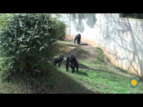 The Smithsonian's National Zoo Welcomes Calaya