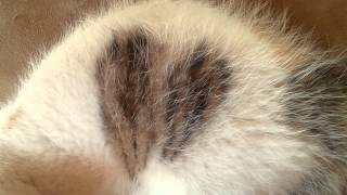 cat's beating heart