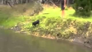 Dog Training Learning To Swim