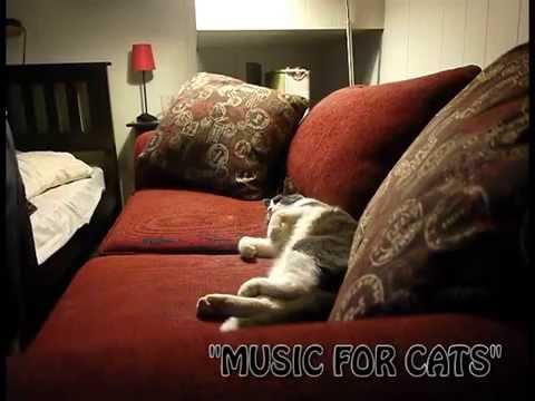 cat phone flir