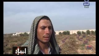 مزارعو الطماطم: اللى بتروح مصانع الصلصة كلها فيها سوسة