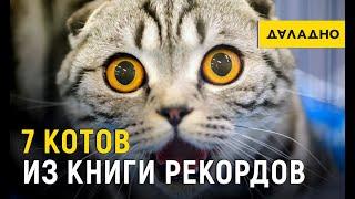 7 котов из книги рекордов. Что умеют пушистые?