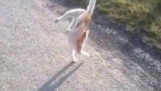 Кота зовут Сема! Кошачий прикол ...Смотреть ВсеМ
