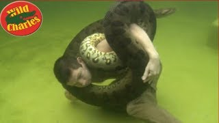 Swimming with Giant Anaconda Snake