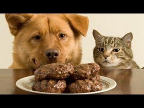 juokingi gyvūnai vagia daiktus  mielas gyvūnų rinkinys
