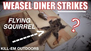 The Weasel Diner Produces a Flying Squirrel!?