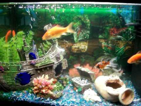 Il mio acquario di pesci rossi youtube for Pesci rossi acquario