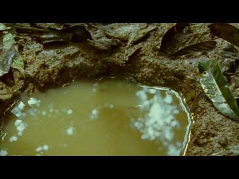 Killifish In Natural Habitat.avi