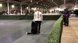 Akc Dog Show 2014 Obedience