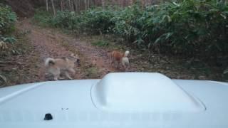 途中で狸かアナグマ発見.