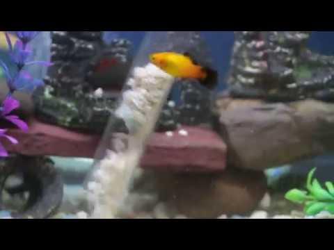 Quickly Clean Aquarium Fish Tank Gravel Change Water With TOBOQ Pump