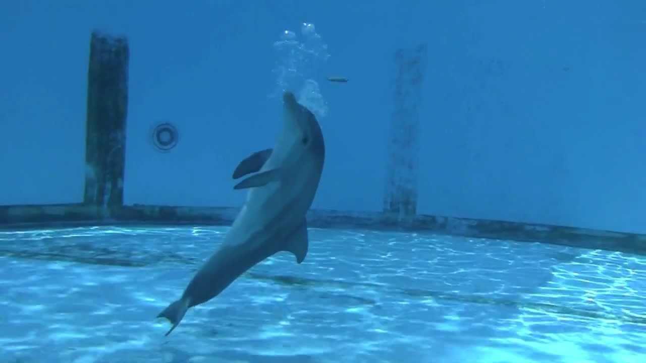 watchin u0027 hope the baby dolphin calf youtube