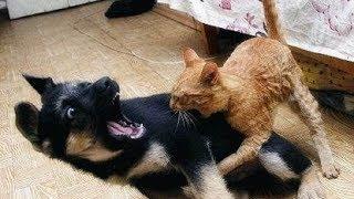 Kot uratował dziecko od złego psa !!! :)