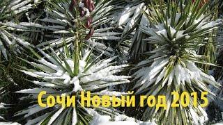 Новый год в Сочи. Пальмы под снегом. Трейлер