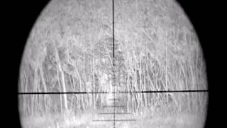 Ward 700 Rabbit Shooting