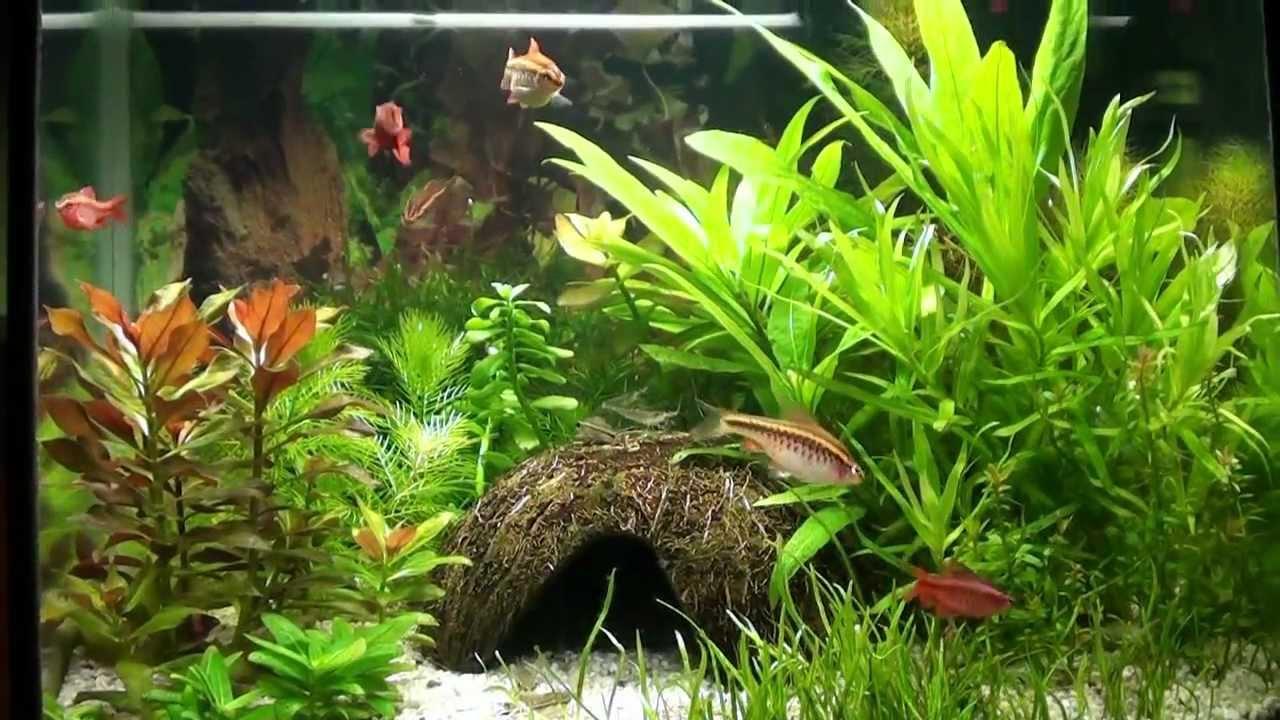 Superfish aquarium fish tank aqua 40 - Aqua 40