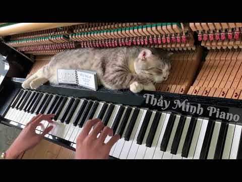 Piano Woogie Boogie Massages For Meow