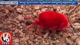 Arudra Worms Business in Nalgonda District   Special Story   V6 News