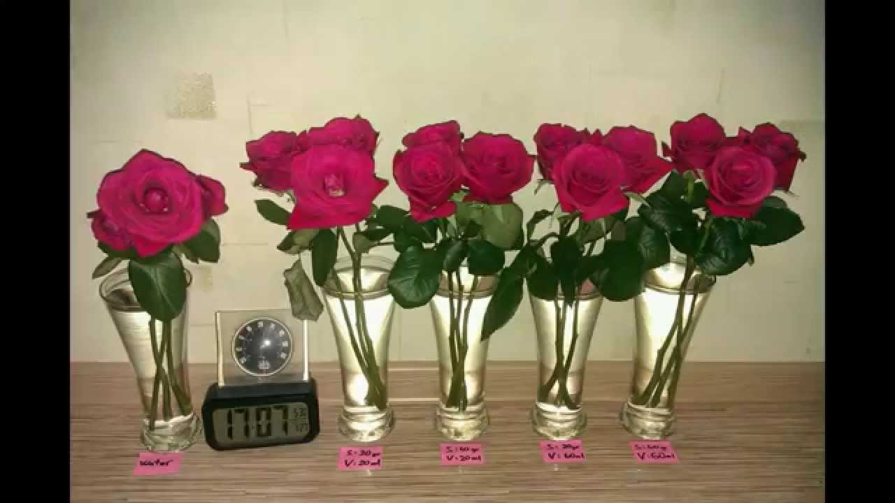 How to extend the life of cut roses youtube how to extend the life of cut roses reviewsmspy