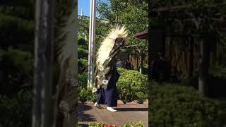 Lion Dance Shishimai 獅子舞 Part 2