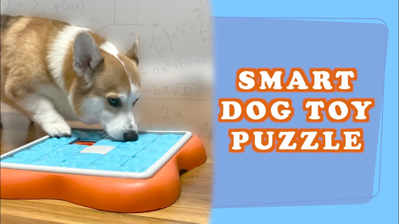 BEST SMART DOG TOY PUZZLE - Review