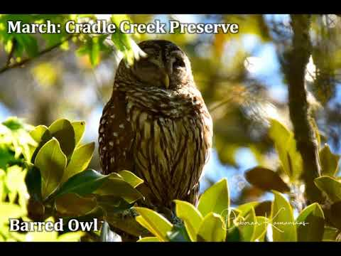 Duval Audubon Society Year in Review 2016/2017