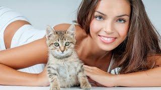 Смешные картинки про кошек и котят Выпуск № 44 FUNNY CATS СМЕШНЫЕ КОШКИ