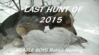 Last Hunt Of 2015(beagle Boys Rabbit Hunting)
