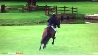 6 yo Top Quality horse . All scope .!!