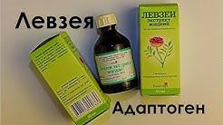 Левзея в спорте. Самый экдистероидный адаптоген. Эффекты, дозировки | Как принимать левзею.