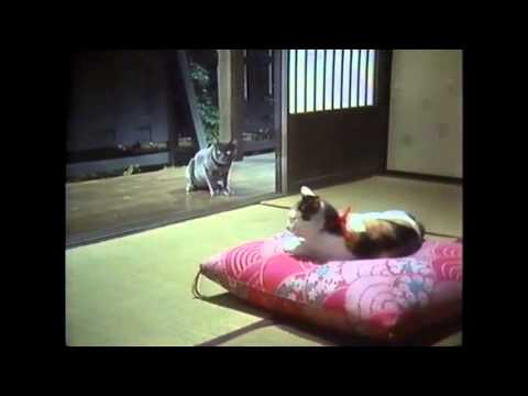 Kon Ichikawa - I Am A Cat (Cat Love Scene...But With A Sad Ending)