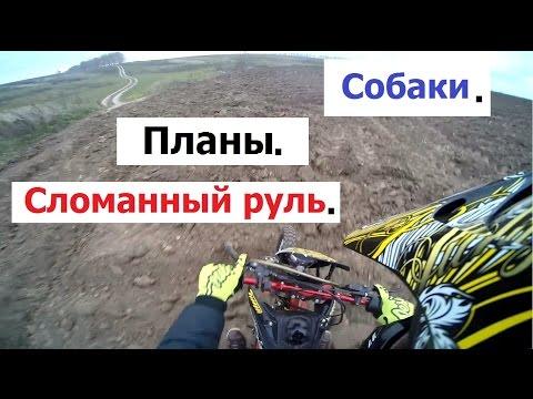 Собаки. Планы. Сломанный руль. (Babzor.ru)