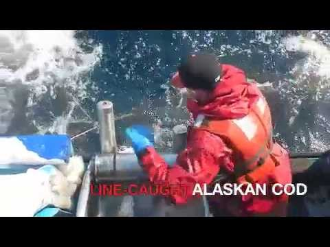 Line-caught Alaskan Cod
