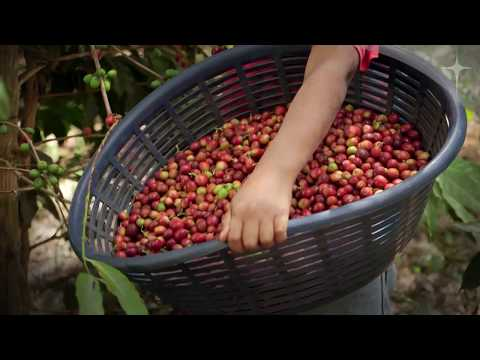 Child Labour: Melvin's Story