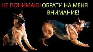 Как животные понимают людей?