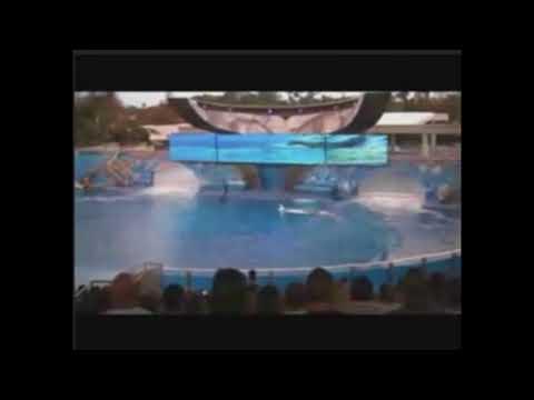 Sea world accident
